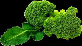 broccoli_PNG2828